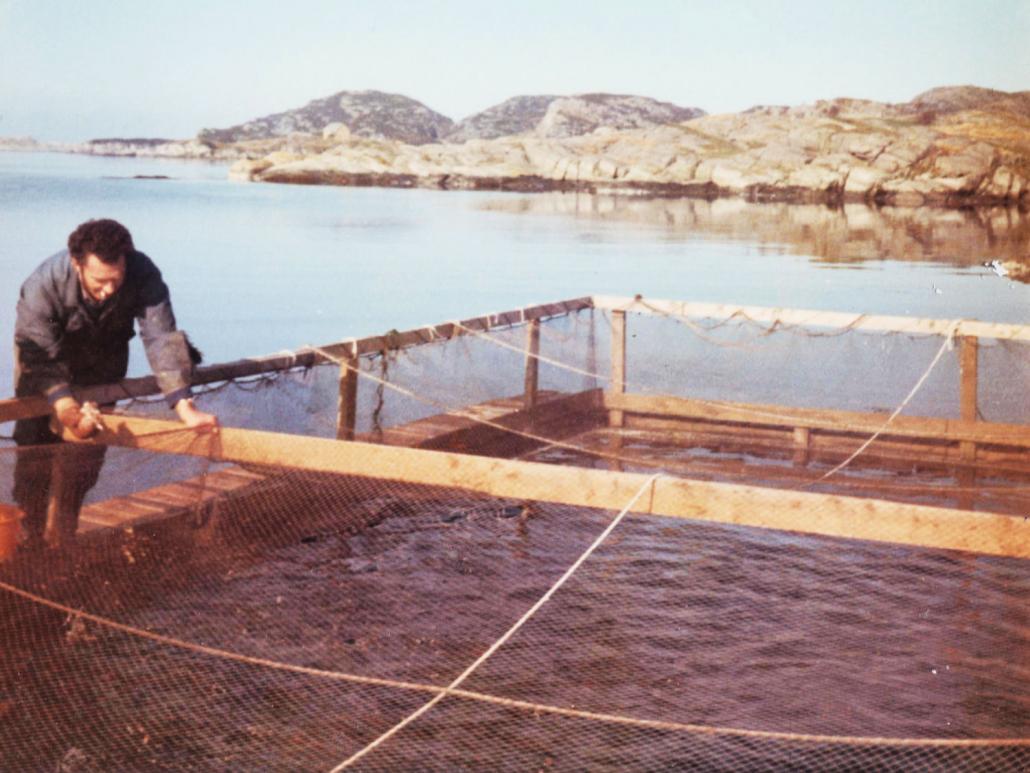 Erling Karstensen fôrar 1978 E. Karstensen Fiskeoppdrett - www.karstensen.no