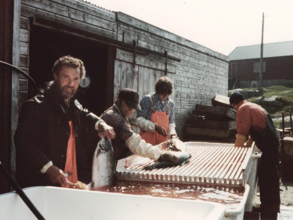 Erling Karstensen slaktar laks 1978 E. Karstensen Fiskeoppdrett - www.karstensen.no